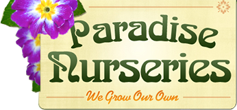 Paradise Nurseries We Grow Our Own